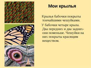 Мои крылья Крылья бабочки покрыты тончайшими чешуйками. У бабочки четыре крыл