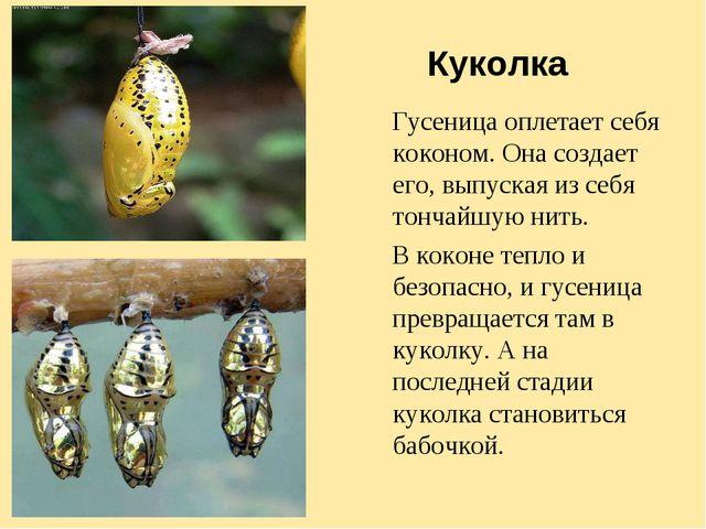 Куколка Гусеница оплетает себя коконом. Она создает его, выпуская из себя тон...