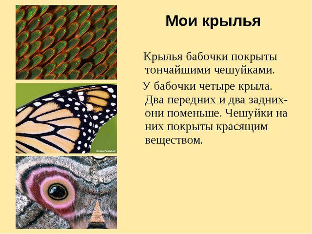 Мои крылья Крылья бабочки покрыты тончайшими чешуйками. У бабочки четыре крыл...