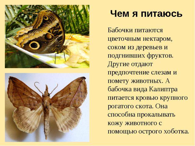 Чем я питаюсь Бабочки питаются цветочным нектаром, соком из деревьев и подгни...