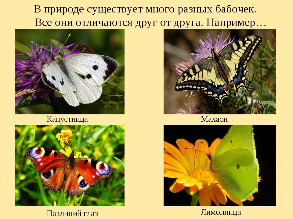 В природе существует много разных бабочек. Все они отличаются друг от друга....