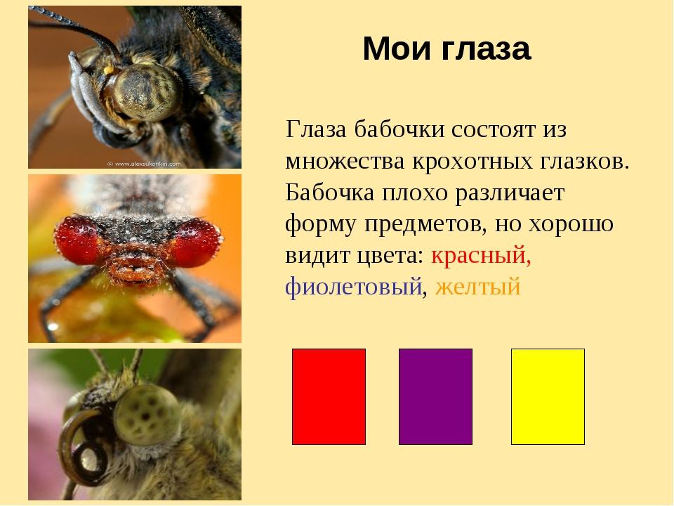 Мои глаза Глаза бабочки состоят из множества крохотных глазков. Бабочка плохо...