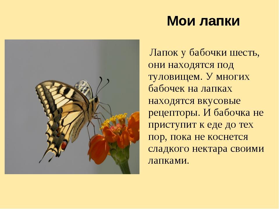 Мои лапки Лапок у бабочки шесть, они находятся под туловищем. У многих бабоче...