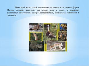 Животный мир степей значительно отличается от лесной фауны. Многие степные ж