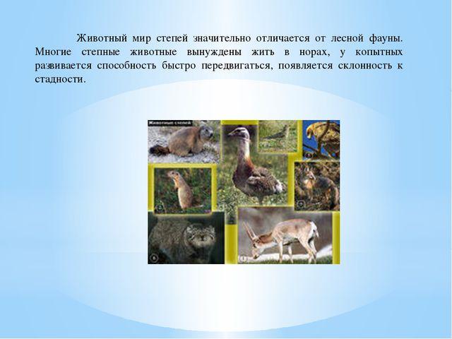 Животный мир степей значительно отличается от лесной фауны. Многие степные ж...