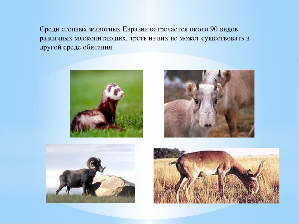 Среди степных животных Евразии встречается около 90 видов различных млекопита...