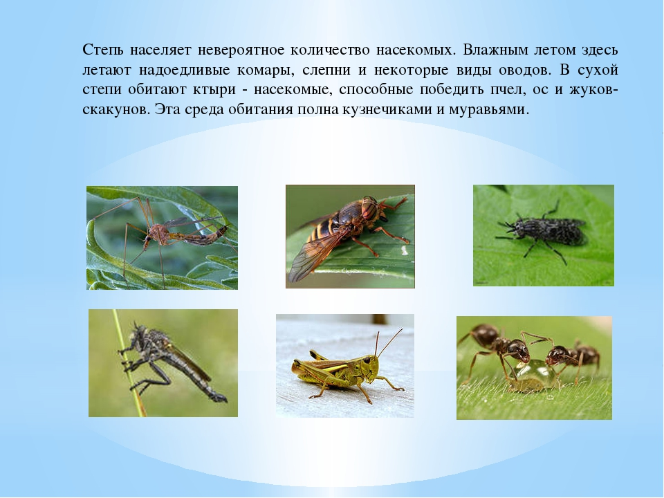 Степь населяет невероятное количество насекомых. Влажным летом здесь летают н...