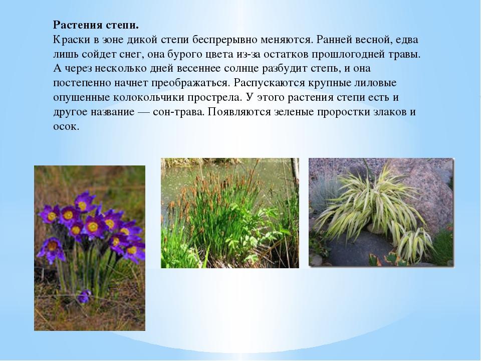 Растения степи. Краски в зоне дикой степи беспрерывно меняются. Ранней весной...