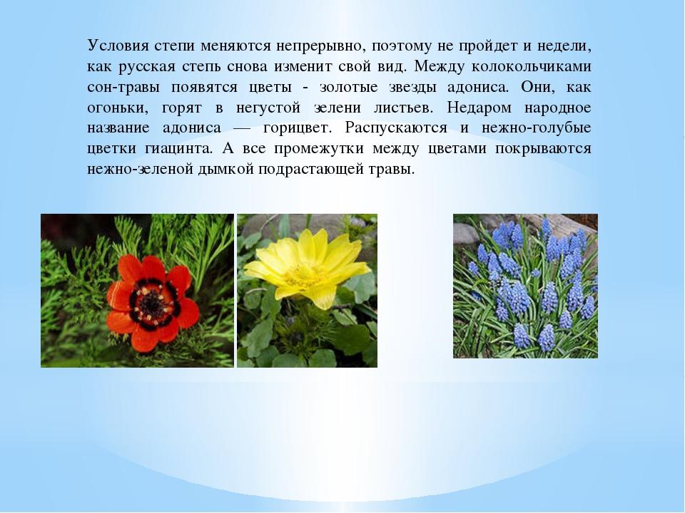 Условия степи меняются непрерывно, поэтому не пройдет и недели, как русская с...