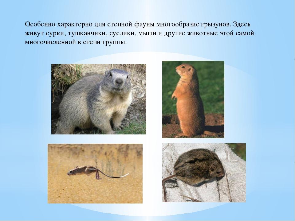 Особенно характерно для степной фауны многообразие грызунов. Здесь живут сурк...