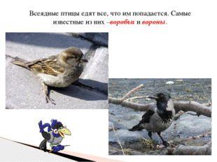 Всеядные птицы едят все, что им попадается. Самые известные из них –воробьи и