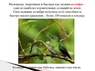 Маленькая, энергичная и быстрая как молния колибри – одно из наиболее изумит