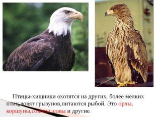 Птицы-хищники охотятся на других, более мелких птиц,ловят грызунов,питаются