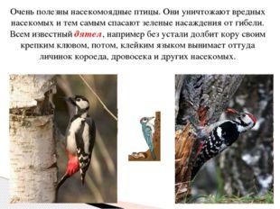 Очень полезны насекомоядные птицы. Они уничтожают вредных насекомых и тем сам