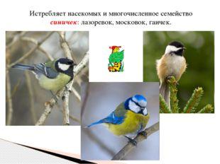 Истребляет насекомых и многочисленное семейство синичек: лазоревок, московок,