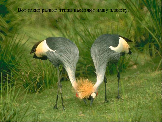 Вот такие разные птицы населяют нашу планету.