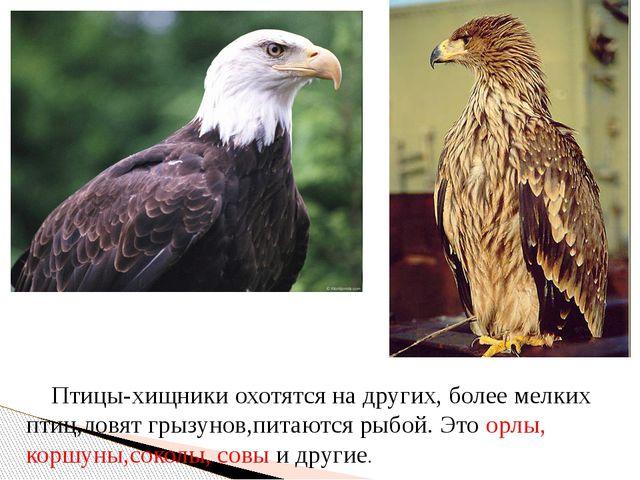 Птицы-хищники охотятся на других, более мелких птиц,ловят грызунов,питаются...