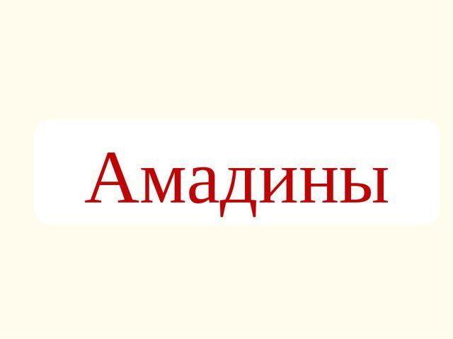Амадины