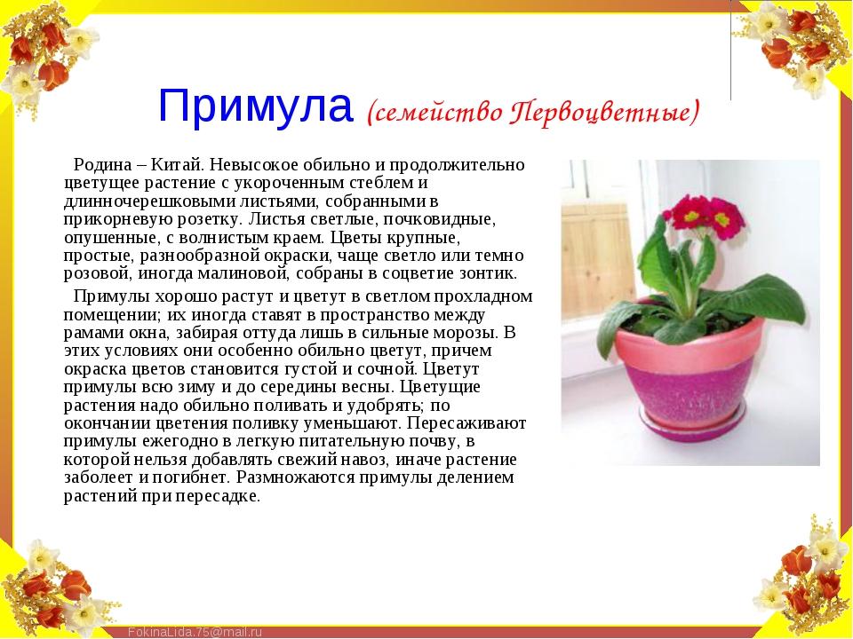Родина – Китай. Невысокое обильно и продолжительно цветущее растение с укороч...