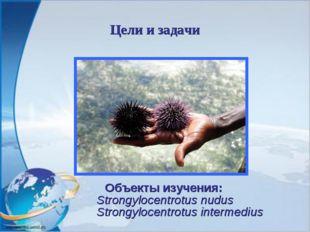 Цели и задачи Объекты изучения: Strongylocentrotus nudus Strongylocentrotus i