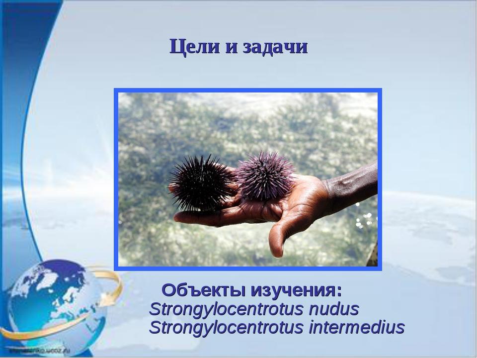 Цели и задачи Объекты изучения: Strongylocentrotus nudus Strongylocentrotus i...