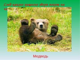 След какого хищного зверя похож на человеческий? Медведь