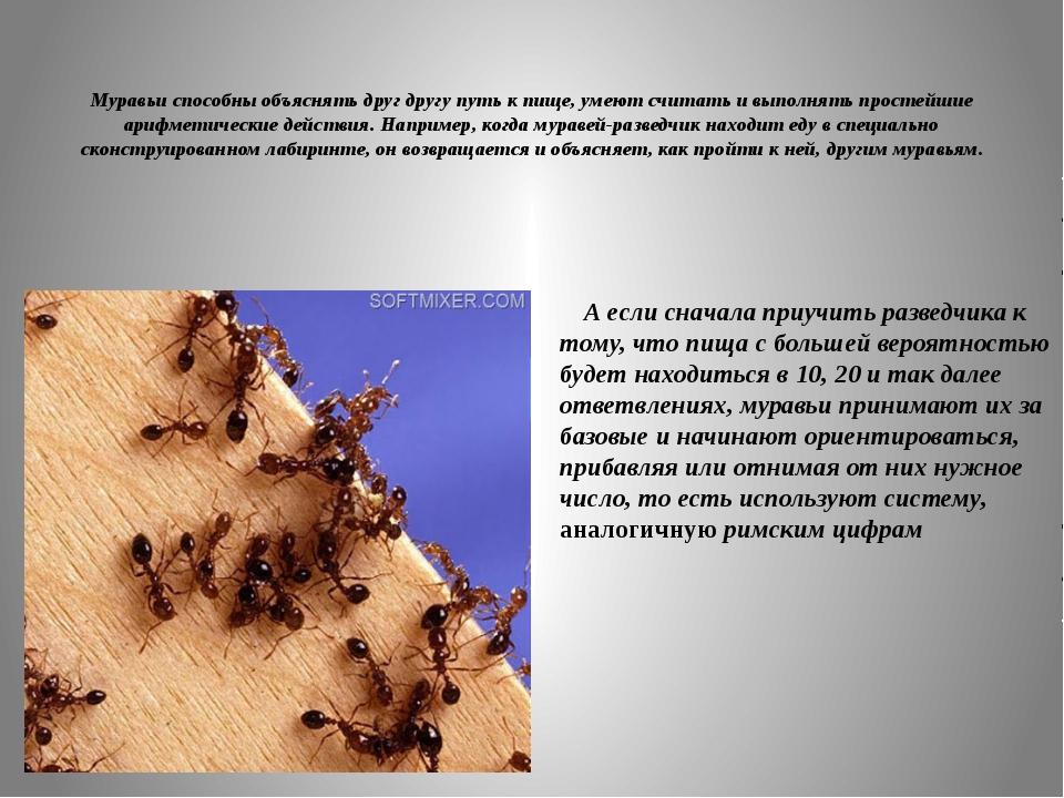 Муравьи способны объяснять друг другу путь к пище, умеют считать и выполнять...