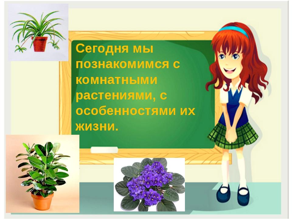 Знакомства с растениями