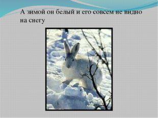 А зимой он белый и его совсем не видно на снегу