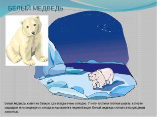 БЕЛЫЙ МЕДВЕДЬ Белый медведь живет на Севере, где всегда очень холодно. У него