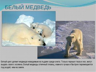 БЕЛЫЙ МЕДВЕДЬ Белый цвет делает медведя невидимым на льдине среди снега. Толь