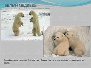 БЕЛЫЙ МЕДВЕДЬ Белый медведь занесён в Красную книгу России, так как из-за охо