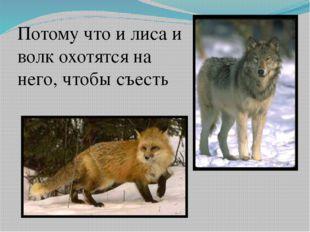 Потому что и лиса и волк охотятся на него, чтобы съесть