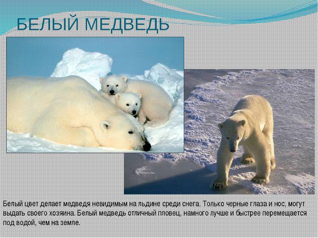 БЕЛЫЙ МЕДВЕДЬ Белый цвет делает медведя невидимым на льдине среди снега. Толь...