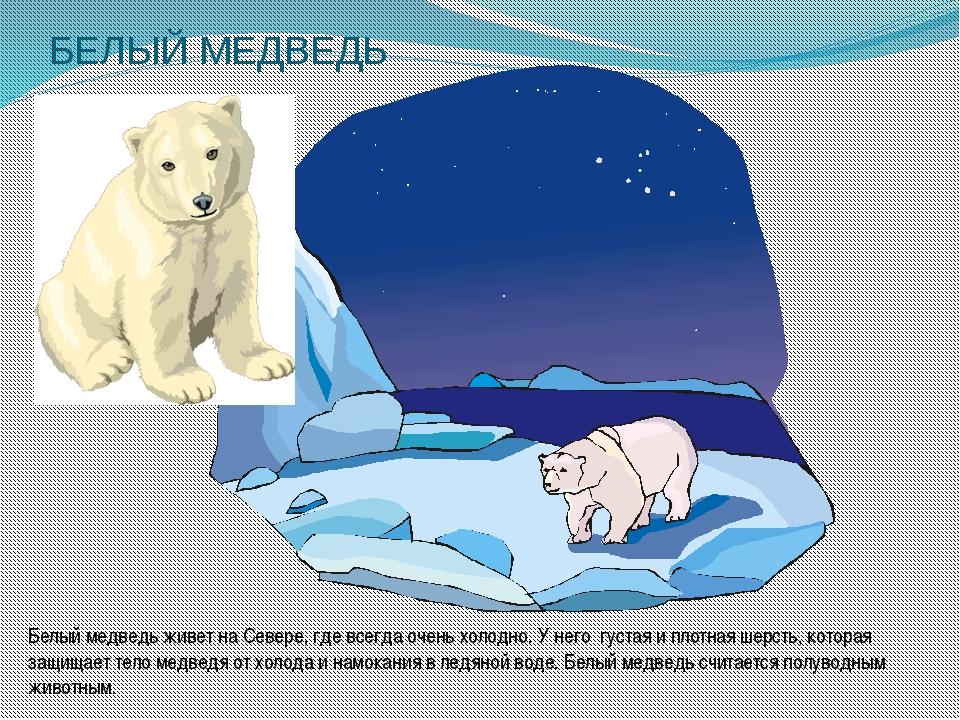 БЕЛЫЙ МЕДВЕДЬ Белый медведь живет на Севере, где всегда очень холодно. У него...