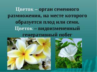 Цветок – орган семенного размножения, на месте которого образуется плод или с