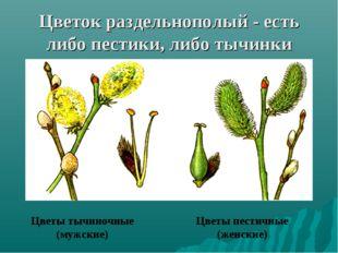 Цветок раздельнополый - есть либо пестики, либо тычинки Цветы тычиночные (муж