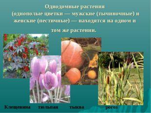 Однодомные растения (однополые цветки — мужские (тычиночные) и женские (пести