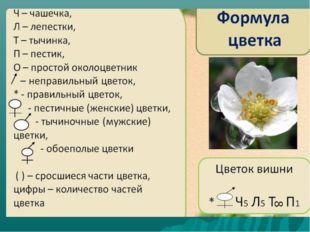 Формула цветка Ч Л Т П