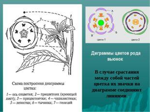 В случае срастания между собой частей цветка их значки на диаграмме соединяют