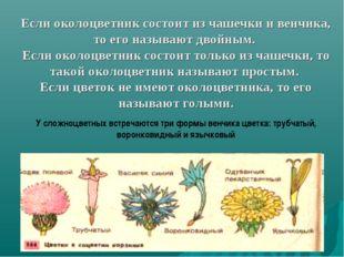 Если околоцветник состоит из чашечки и венчика, то его называют двойным. Если