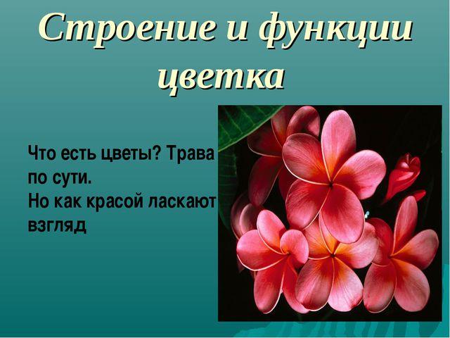 Строение и функции цветка Что есть цветы? Трава по сути. Но как красой ласкаю...