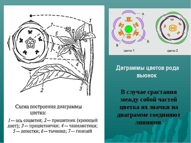 В случае срастания между собой частей цветка их значки на диаграмме соединяют...