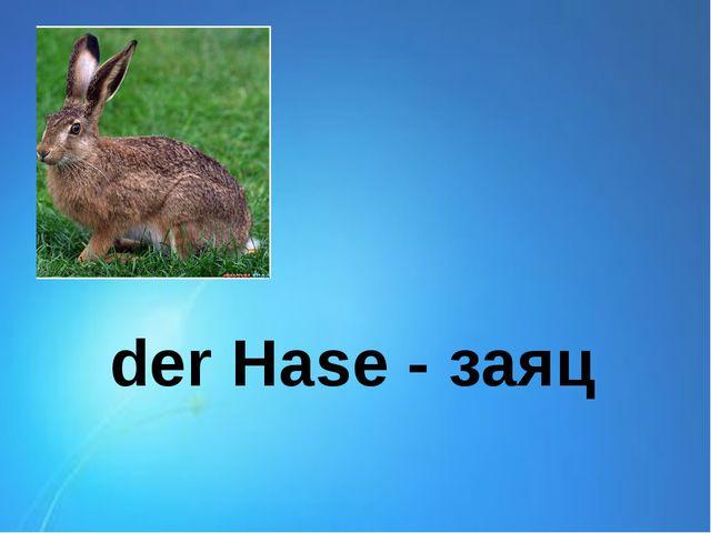 der Hase - заяц