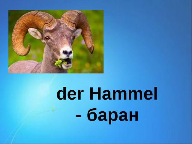 der Hammel - баран