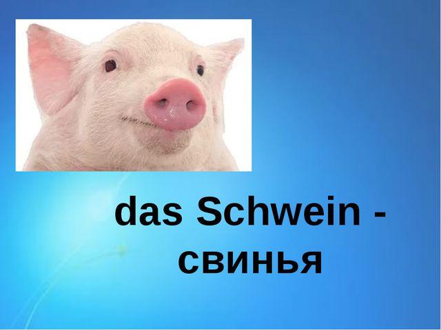 das Schwein - свинья