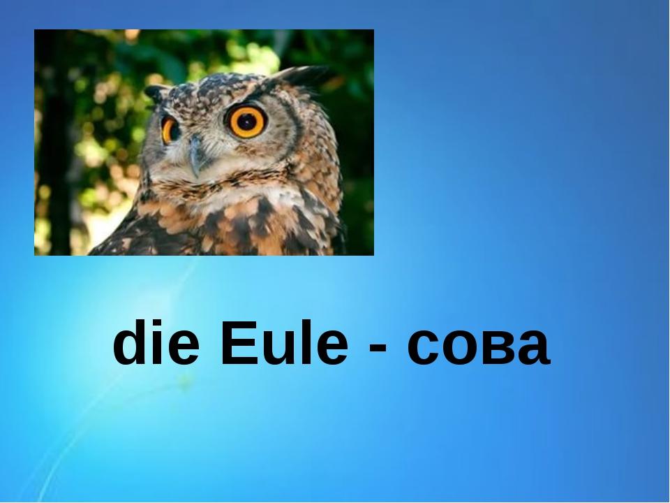 die Eule - сова