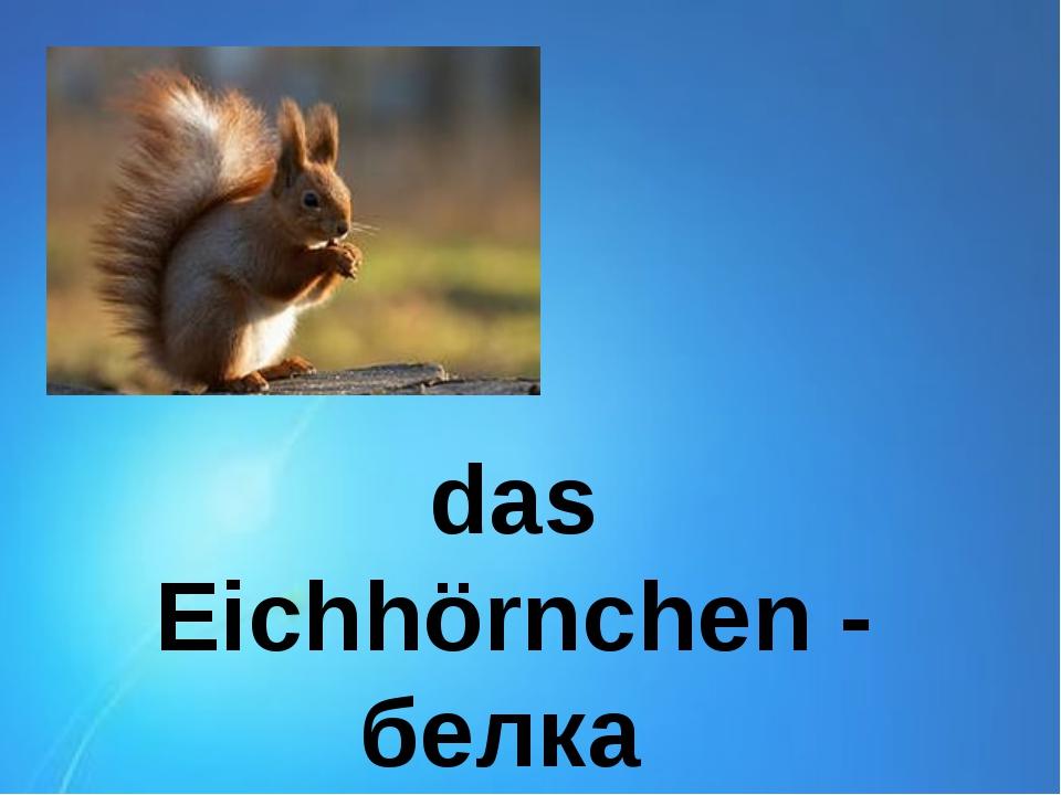 das Eichhörnchen - белка