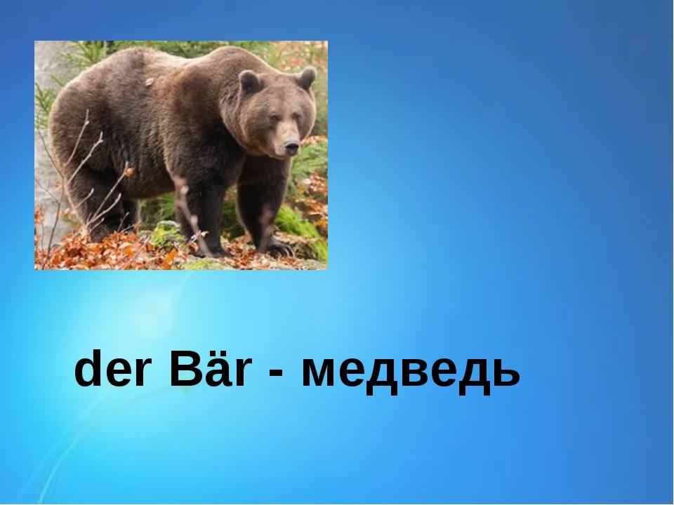 der Bär - медведь