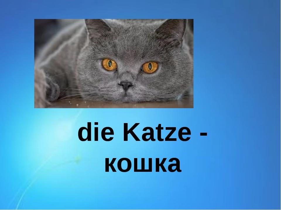 die Katze - кошка